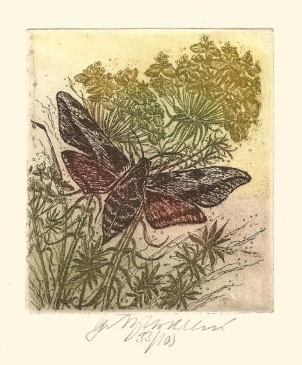 Vychodilová Olga - Noční motýl I - Grafika