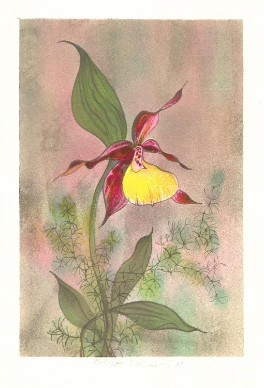 Benešová Daniela - Orchidea - Grafika